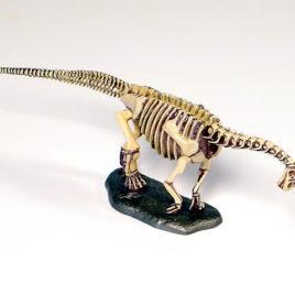Dinotales Series 7 Camarasaurus Skeleton B