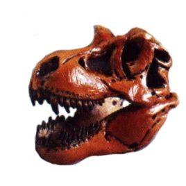 Dino Tales Series 1 #023 T Rex Skull