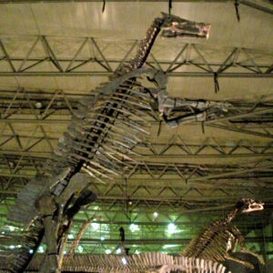 Dino Kingdom Expo Japan 2012 Sinoceratops Capsule Figure
