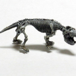 Dawn of the Dinosaurs Exhibit Exclusive Exaeretodon Skeleton