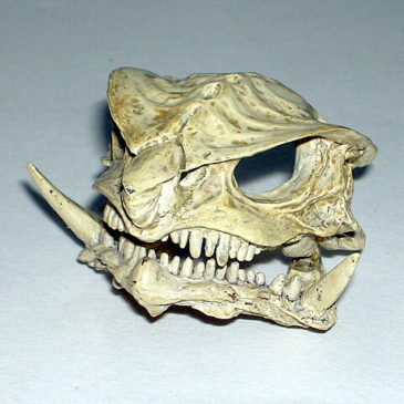 Gamera 3 Skull by Iwakura Bone Color Version Rare