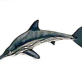 Dinotales Series 2 #034 Ichthyosaurus