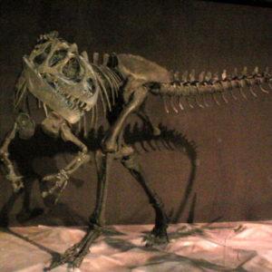 Dino Kingdom Expo Japan 2012 Allosaurus Fragilis Capsule Toy